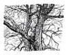 Cartoon: landscape number 31 (small) by mortimer tagged mortimer,mortimeriadas,paisaje,landscape,sketch,draw,artwork,nature,tree,la,mancha,spain