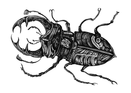 Cartoon: Hirschkäfer (medium) by Battlestar tagged illustration,natur,hirschkäfer,beetle,bug,käfer,insekten,insects
