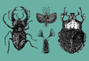 Cartoon: Bugs (small) by Battlestar tagged bugs insekten insects nature natur zeichnung illustration