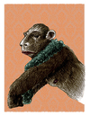 Cartoon: without title (small) by jenapaul tagged apes,monkeys,men,humans,women