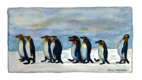 Cartoon: King Penguins (medium) by Pascal Kirchmair tagged königspinguine,manchots,royaux,pinguine,king,penguins,watercolour,aquarell,pascal,kirchmair,pinguinos,reales,illustration,drawing,zeichnung,cartoon,caricature,karikatur,ilustracion,dibujo,desenho,ink,disegno,ilustracao,illustrazione,illustratie,dessin,de,presse,du,jour,art,of,the,day,tekening,teckning,aquarelle,watercolor,acquarello,acuarela,aguarela,aquarela,painting,malerei,peinture,dipinto,pintura,pittura,cuadro,quadro,königspinguine,manchots,royaux,pinguine,king,penguins,watercolour,aquarell,pascal,kirchmair,pinguinos,reales,illustration,drawing,zeichnung,cartoon,caricature,karikatur,ilustracion,dibujo,desenho,ink,disegno,ilustracao,illustrazione,illustratie,dessin,de,presse,du,jour,art,of,the,day,tekening,teckning,aquarelle,watercolor,acquarello,acuarela,aguarela,aquarela,painting,malerei,peinture,dipinto,pintura,pittura,cuadro,quadro
