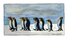 Cartoon: King Penguins (small) by Pascal Kirchmair tagged königspinguine manchots royaux pinguine king penguins watercolour aquarell pascal kirchmair pinguinos reales illustration drawing zeichnung cartoon caricature karikatur ilustracion dibujo desenho ink disegno ilustracao illustrazione illustratie dessin de presse du jour art of the day tekening teckning aquarelle watercolor acquarello acuarela aguarela aquarela painting malerei peinture dipinto pintura pittura cuadro quadro