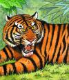 Cartoon: Tiger (small) by deleuran tagged tiger,cat,animals,zoo,jungle,wildlife,