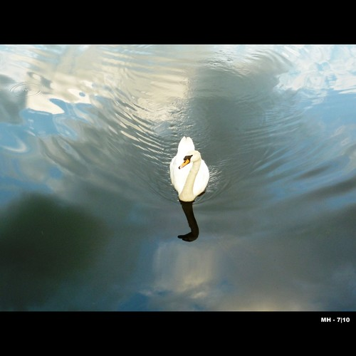 Cartoon: MH - The Careful Swan (medium) by MoArt Rotterdam tagged swan,zwaan,voorzichtig,careful,water,clouds,wolken