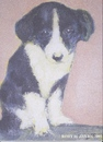 Cartoon: Rory (small) by jjjerk tagged dog rory cartoon ireland caricature black white animal