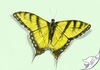 Cartoon: Papilio machaon (small) by swenson tagged butterfly schmetterling 2011 schwalbenschwanz insekt insect animal animals tier tiere falter