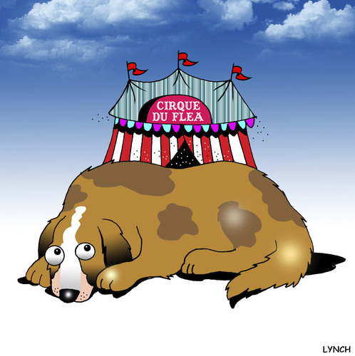 Cartoon: Cirque Du Flea (medium) by toons tagged dogs,circus,flea,cirque,do,solei,fleas