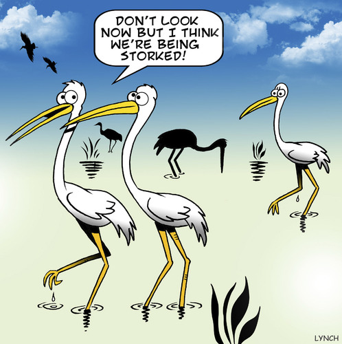 Cartoon: Storked (medium) by toons tagged stalking,followed,storks,birds,romance