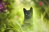 Cartoon: Black Cat (small) by BenHeine tagged cat,black,animal,benheine,photography,tunisia,green,chance,superstition