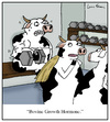 Cartoon: Bovine Growth Hormone (small) by Humoresque tagged cow,cows,cattle,bgh,bovine,growth,hormone,hormones,dairy,farmer,farmers,farm,farms,additives,organic,organics,beef,meat,meats,milk,production,product,products,health,toxin,toxins,steroid,steroids,bodybuilder,bodybuilders,drug,drugs,monsanto