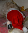 Cartoon: Ich will von Weihnachten nix ... (small) by Resha tagged christmas,fun,dog,animal,nature,humor,religion,angel