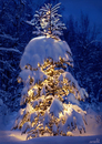 Cartoon: Lady Christmas Tree (small) by Medi Belortaja tagged lady,christmas,tree,merry,snow,holydays,spruce