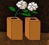 Cartoon: winner of elections (small) by Medi Belortaja tagged elections,manipulations,vote,flower,democracy