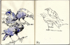 Cartoon: Murder2 (small) by halltoons tagged bird birds crow crows sketch watercolor