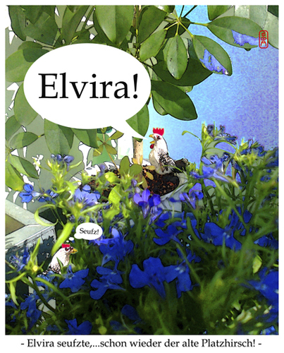 Cartoon: Elvira (medium) by edda von sinnen tagged sinnen,von,edda,elvira,zenf,zenundsenf,zensenf,leidenschaft,liebe,balkon,2013,sommer,henne,hahn,gockel,composing,illustration,cartoon