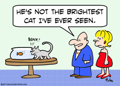 Cartoon: brightest cat bump goldfish (medium) by rmay tagged brightest,cat,bump,goldfish